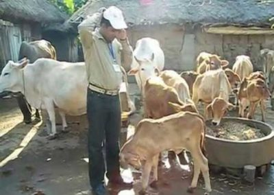 2010-Odisha-1st-Graded-Gir-calf-herd